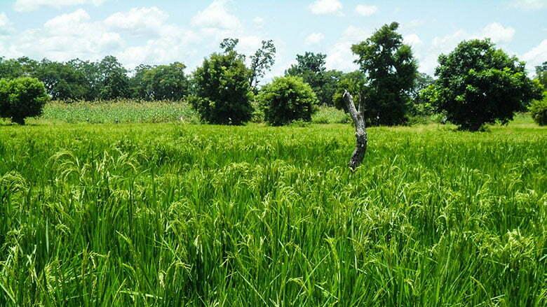 PREVISONS AGROCLIMEATIQUES : La saison agricole 2019 commence en mai et finit en octobre