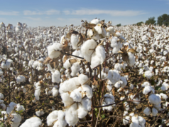 Cotoncultureau Burkina Faso
