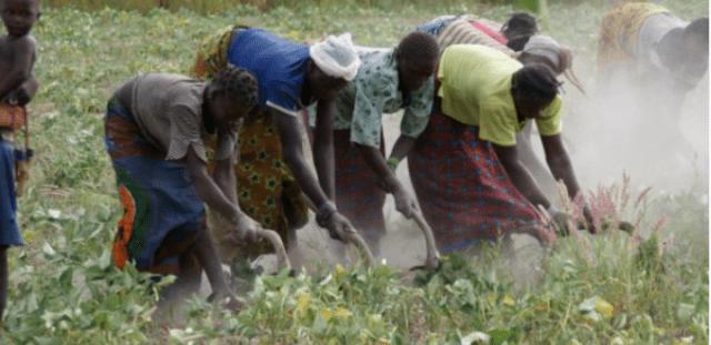 Agriculture sécurité alimentaire